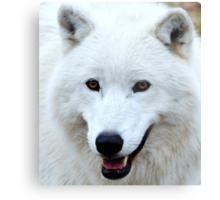 Wolf in sheeps clothing? Metal Print