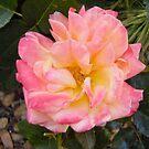 Memories of Roses by Shulie1