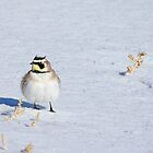 Mr. Horned Lark by A.M. Ruttle