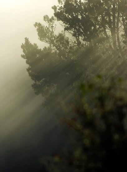 Trees in the Mist by Shane Viper