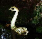 A unusual swan by Kayleigh Walmsley