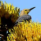 Pollen Loving Woodpecker  by Judy Grant