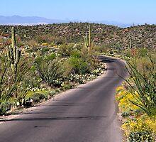 Colorful Desert Loop  by Judy Grant