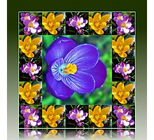 Crocus Collage in Reflection Frame Photographic Print