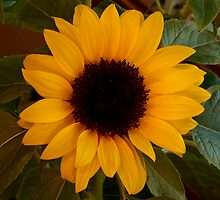 Sunflower Too by Ritchie Belleque