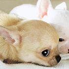 Tiny, tired pups by MayJ