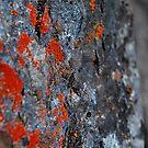 Lichen the Granite-Merced River, Mariposa, Ca by Alan Brazzel
