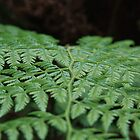 Green Fern - Allenby Park by bhooper