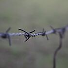 Barb Wire - Narooma by bhooper