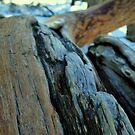 Twist Tree2-Yosemite National Park, Ca by Alan Brazzel