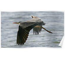 Grey Heron 1 at Mtwapa beach, Kenya Poster