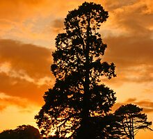 Tree at sunset by Martina Fagan