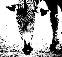 The Art of Black and White Stripes by Ryan Davison Crisp