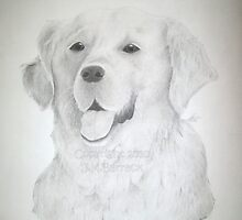 Lady - Golden Retriever by Joann Barrack