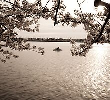 Blossoms at Sunset by Eric G Brown