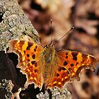 Comma by relayer51