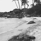 Basking Hawaiian Sea Turtles by Susan Chandler