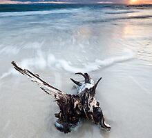 Bribie Island, Queensland by matthewfry