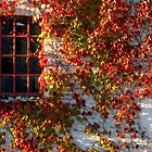 Red wine leaves on wall by Nordlys