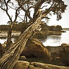 Paperbark with Rocks by pennyswork