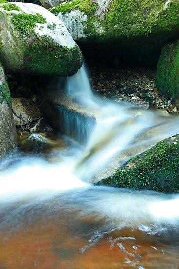 Woodland water at Glencree No4 by Martina Fagan