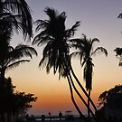Sunset with Palm Trees! by katievphotos