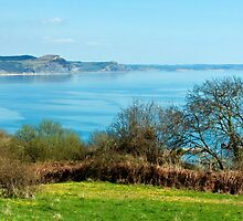 Cobb Harbour Overlook ~ Lyme Regis by Susie Peek