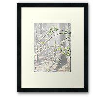 Elegance Of A Springtime Morning Framed Print