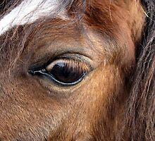 Eye of a Friend by Detlef Becher