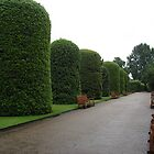 Tall Bushes, Kensington Gardens, London by MaggieGrace