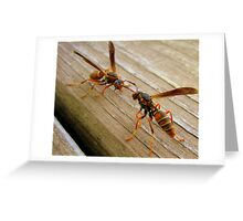 Dueling Wasps Greeting Card