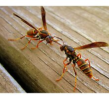 Dueling Wasps Photographic Print