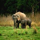 Elephant family - Learn care from the biggest land mammal by Dhiraj Anand Khatri