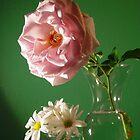 Rosie Spring Colors 2 by Christina Spiegeland