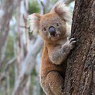 A famous Australian. by Donovan wilson