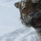 On the Prowl 3, The snow of Minnesota zoo by Glynn Jackson