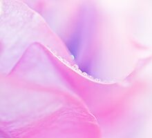 Petals and Pearls by Angela  Ardis