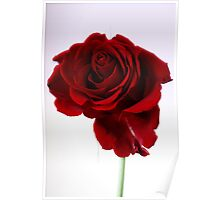 Long Stemmed Rose Poster