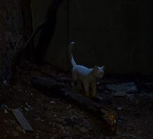 Ghost Cat by DeWolf