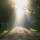 ~ Sun Rays ~ by LeeoPhotography