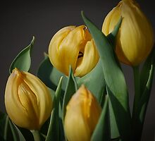 Yellow Tulips Flowers by Jonice
