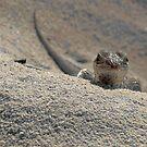 The Little Lizard by Michael Skeard