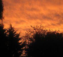 Suburban sunset by windycorner