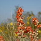 wildflower fun by Bonnie Pelton