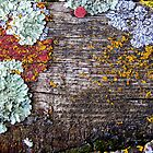 Lichen Playground by AsEyeSee