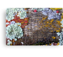Lichen Playground Canvas Print