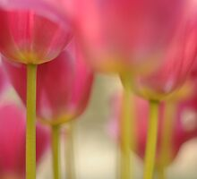 Tulips Together by pixelgrey