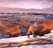 Canyon Fox by Jay Ryser