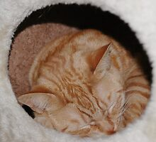 rusty snoozing in his cat tree box by rkdownton