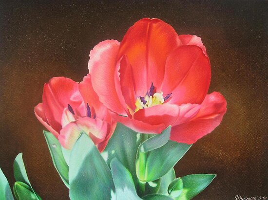 Tulips - Red Silk by lanadi